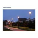 Pilz Straßenbeleuchtung